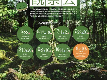 北八ヶ岳苔の森観察会