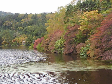 白駒池の紅葉が始まりました