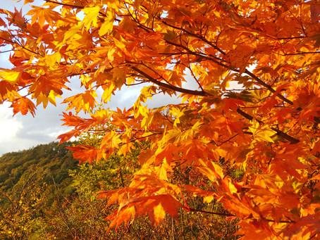 横谷観音の紅葉始まりました。