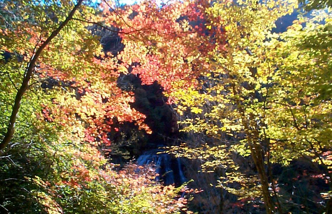 横谷峡紅葉
