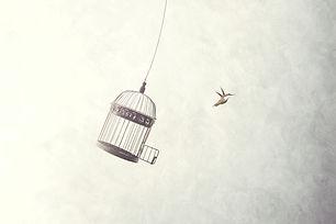 little birds escape out of birdcage, fre