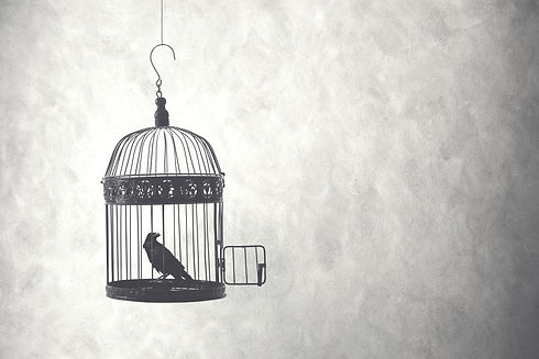 freedom concept, bird in an open cage .j