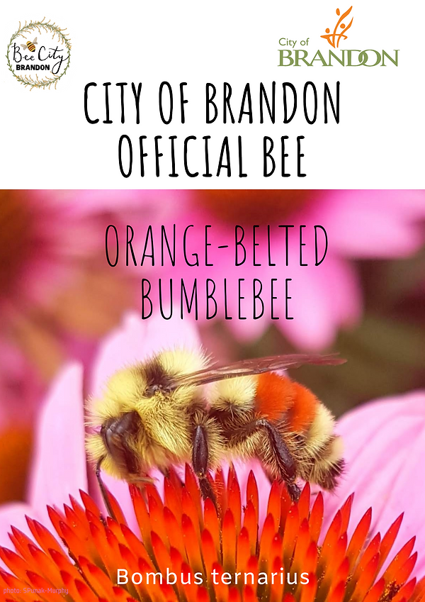 Official Bee poster.png