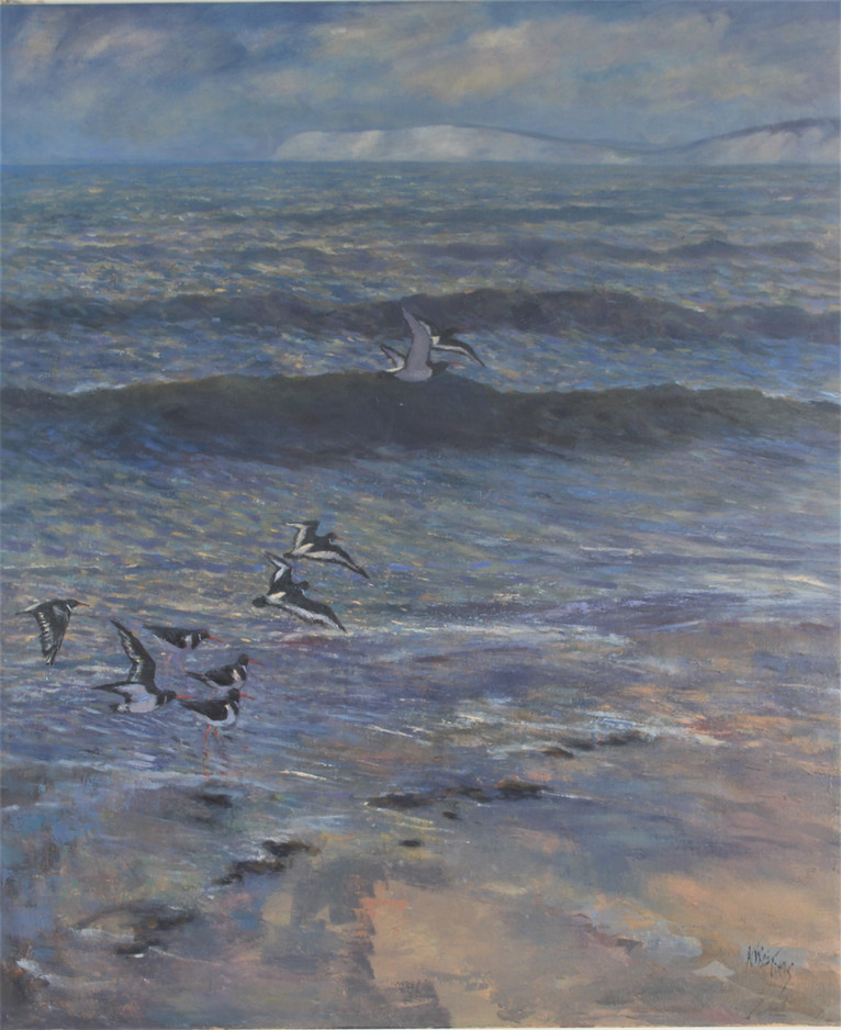 Oyster Catchers, Compton (2)