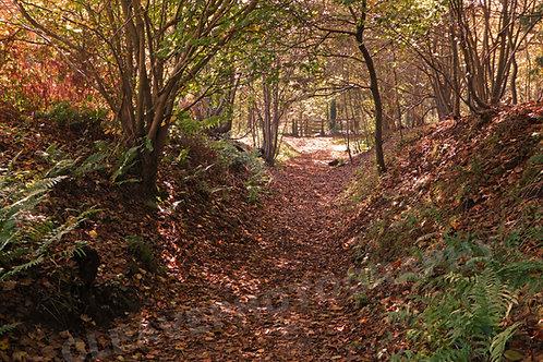Autumn, Mottistone Woods, IW