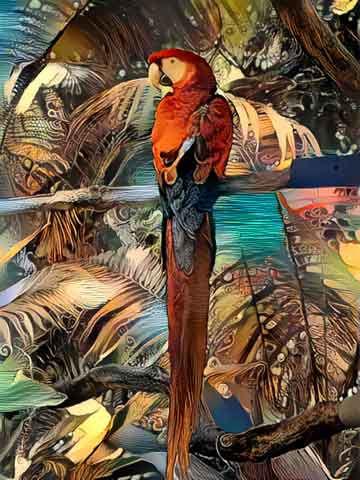 Dream macaw