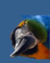 Macaw beak