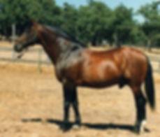 Wildfeuer L to R.jpg