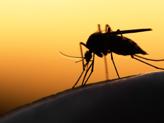 New Research Fellow position available: impact of climate change on vector borne diseases