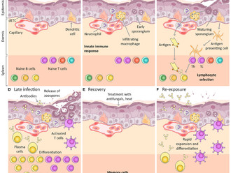 Chytridiomycosis immunity review now published!