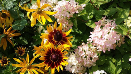 Late Summer Blooms in the Garden