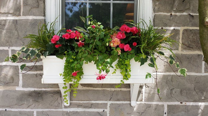 Annuals for Flower Box