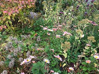 Fall Garden .jpg