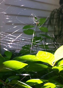 beautiful spider web in sunshine