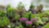 New Fresh Landscape Garden Install