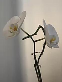 white flower.webp
