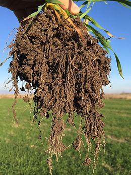 UN_MAR_b_Image_Soil_after_2_191023.jpeg