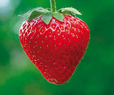 STRAWBERRY - SOME KIND OF QUEEN OF THE FRUITS