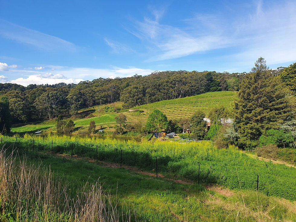 jauma-farm.jpg
