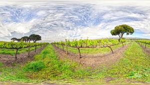 McLaren Vale Winery
