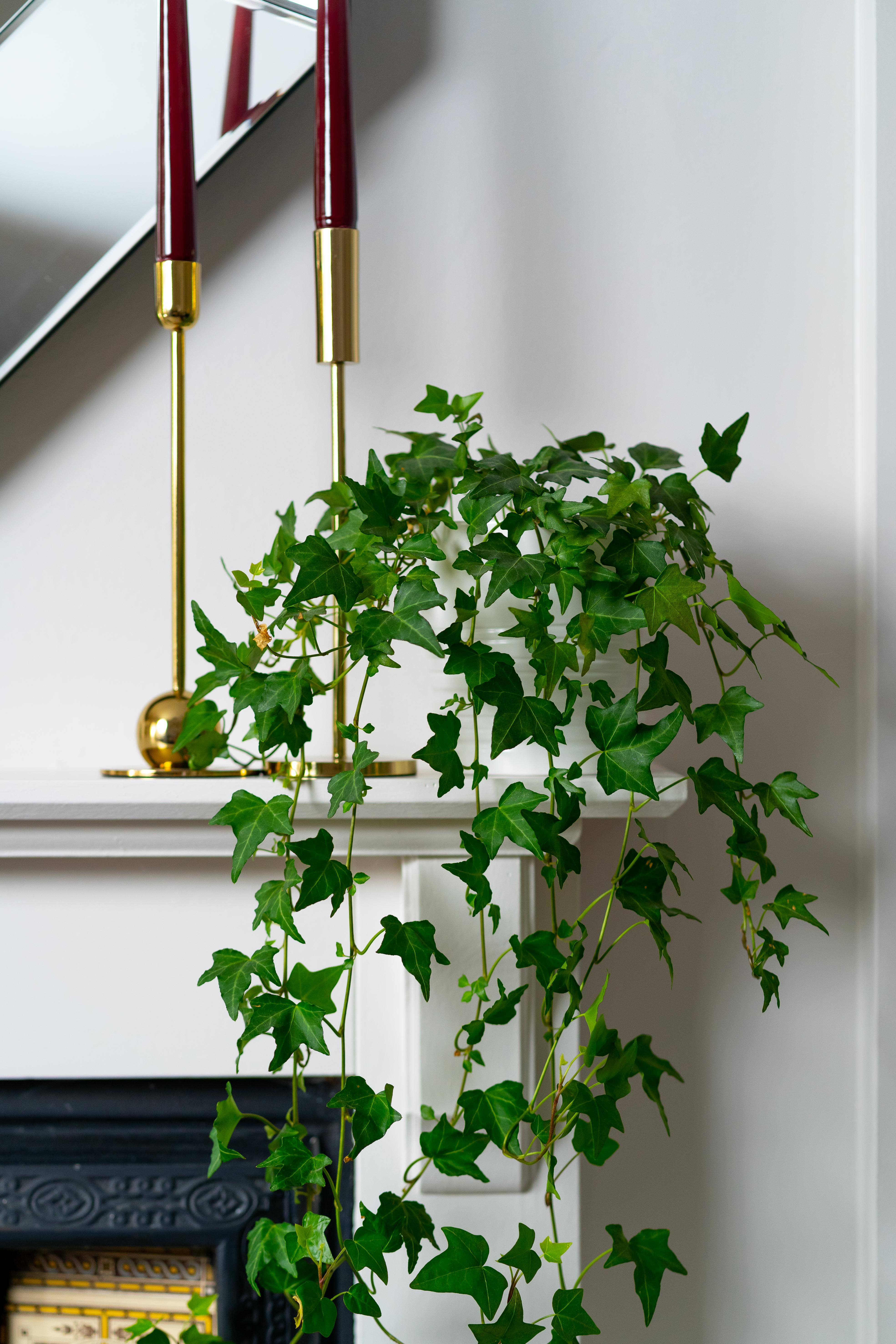 Plant mantle