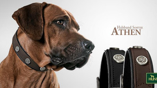 NEW: HUNTER Collars & Leashes from Germany