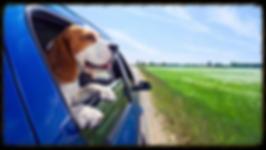 grooming, dog grooming, pet grooming, pet taxi, transport