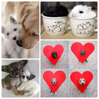 DOG PRESS: 5 Ways to Celebrate Valentine's Day with your Pet