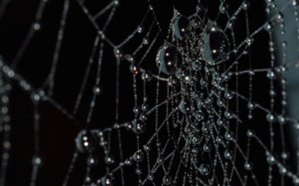 arachnid-close-up-cobweb-27634710b60