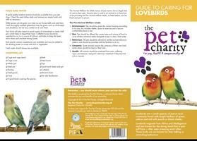Lovebirds advice for Birds