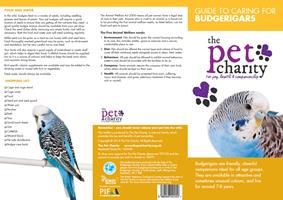Budgerigars advice for Birds