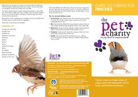 Finches advice for Birds