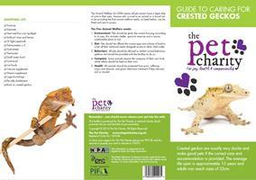 Crested Geckos.jpg