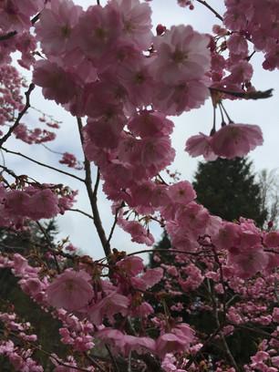 Wir wollen den Frühling zurück