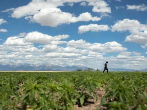 Patagonia's Helping 'Bring Hemp Home' to Colorado Farms