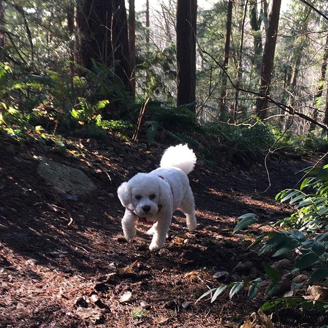 Exploring new smells.jpg Beautiful day for a hike