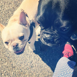 A forming friendship between #frenchies
