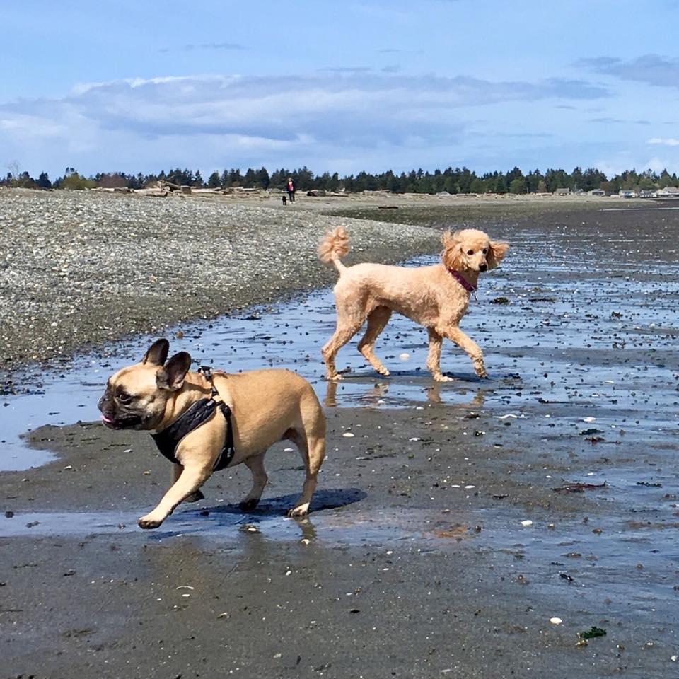 Stella and Coco