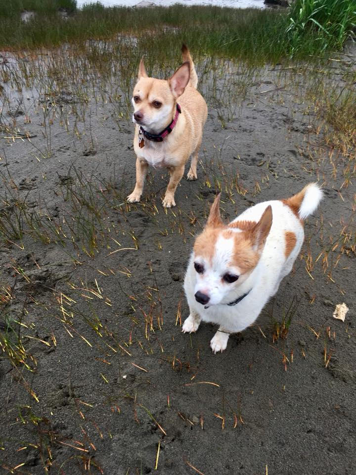 Roxy and ChaChi - Chi Love