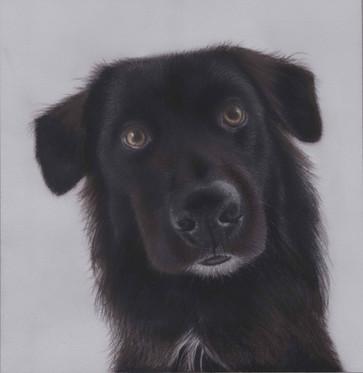 Miniature pastel pet portrait of a dog i