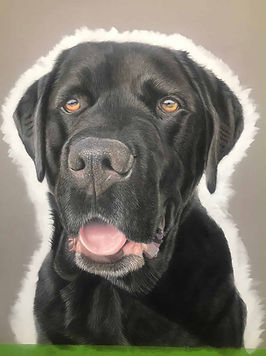 Creating a pastel pet portrait from phot
