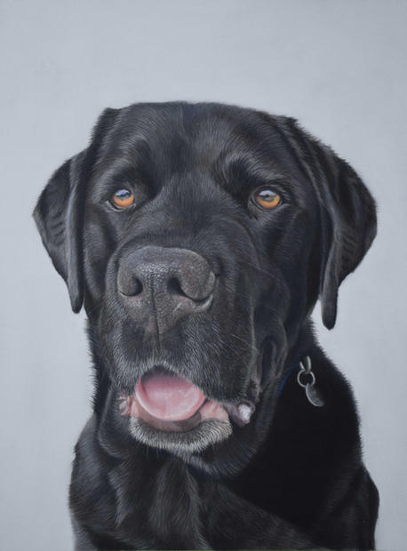 Black Labrador Dog Pastel Portrait