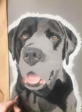 Pet portrait in pastels dog