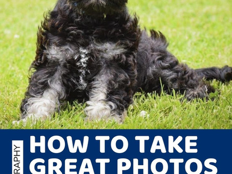 How to Take Great Photos of Your Puppy