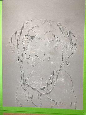 Creating a pet portrait in pastels
