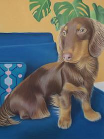 Sausage Dog Pastel Pet Portrait
