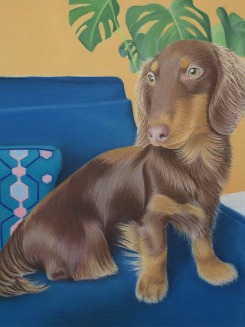 Sausage Dog Pastel Pet Portrait