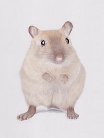 Gerbil Pet Portrait in Pastels _ Small A