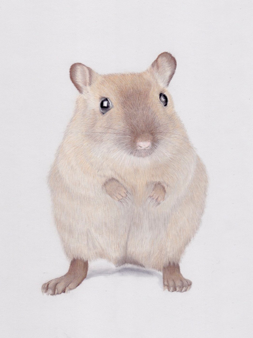 Gerbil Pet Portrait in Pastels _ Small A