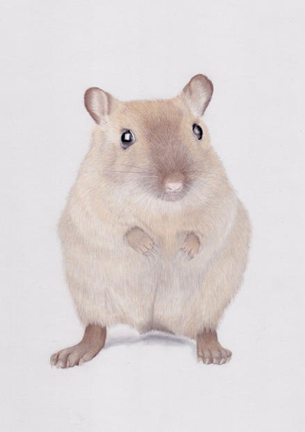 Gerbil Pet Portrait in Pastels | Small A
